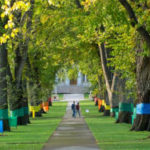 colorful banners on trees at the CSU oval